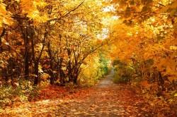 Осень - время осеннего призыва
