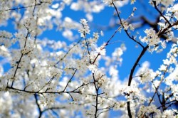 Весна - время весеннего призыва в армию